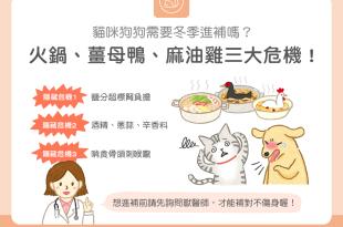 貓狗冬季進補麻油雞薑母鴨火鍋小心補過頭造成肝腎負擔