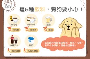 【汪喵餵養知識】狗狗要小心的5種飲料,熱可可、咖啡、茶、酒通通禁止!