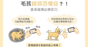 貓咪狗狗寵物拍攝技巧
