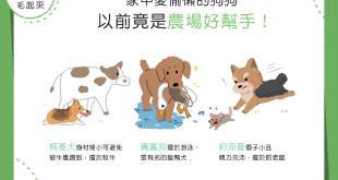 【汪汪小學堂】家中愛偷懶的狗狗,以前竟是農場好幫手?!