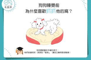【汪汪行為學】狗狗睡覺前,為什麼喜歡抓抓牠的窩?