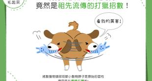 【汪汪小學堂】狗狗咬玩具狂甩頭-竟然是祖先流傳的打獵招數!