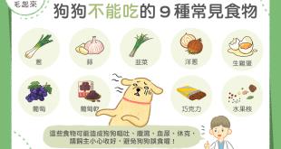 狗狗不能吃的9種常見食物