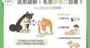 【汪喵康健】毛孩舔傷口自癒?小心細菌感染更嚴重!