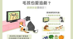 貓咪狗狗愛看電視,是電視兒童,記得保養眼睛