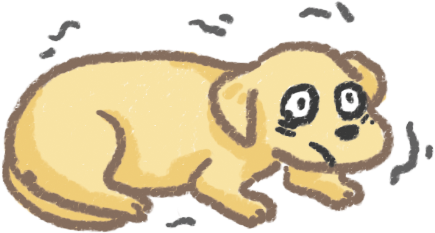 狗狗發抖顫抖程度原因身體警訊發抖危險程度興奮緊張氣溫過低疾病中毒