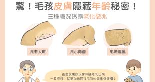 毛孩皮膚隱藏年齡秘密三種膚況代表毛孩老了老化老人斑長肉瘤毛流混亂毛髮雜亂
