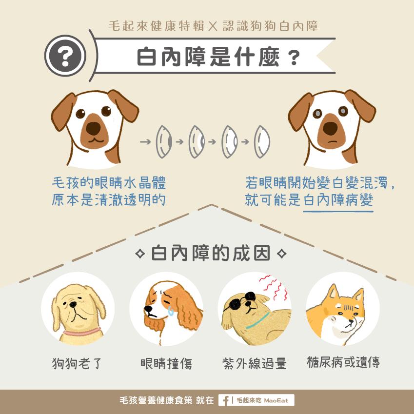 狗狗白內障成因