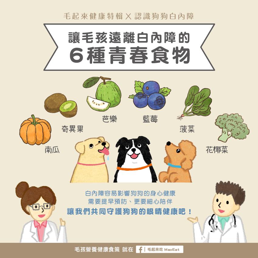 毛孩寵物狗狗白內障原因症狀介紹特輯葉黃素紫外線地區吃什麼眼睛抗老化