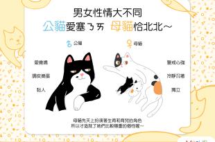 男女性情大不同——公貓愛塞奶,母貓恰北北?