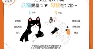 【喵喵小學堂】男女性情大不同——公貓愛塞奶,母貓恰北北?