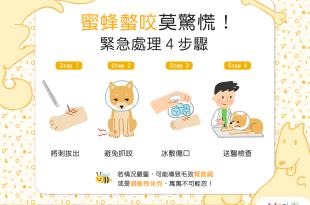 狗狗貓貓被蜜蜂螫到怎麼辦?!緊急處理4步驟!