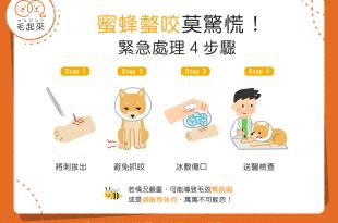 【汪喵康健】狗狗貓貓被蜜蜂螫到怎麼辦?!緊急處理4步驟!