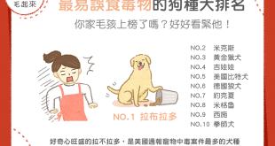【汪喵餵養知識】最容易誤食毒物的狗種大排名!你家毛孩上榜了嗎?