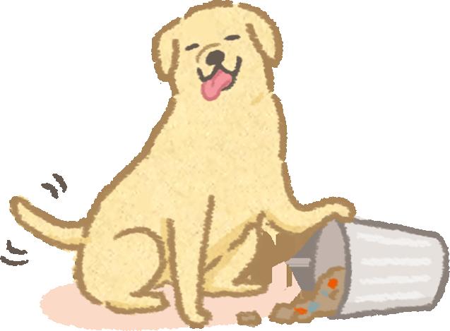 狗狗寵物亂吃東西誤食品種排名中毒案件毛起來吃