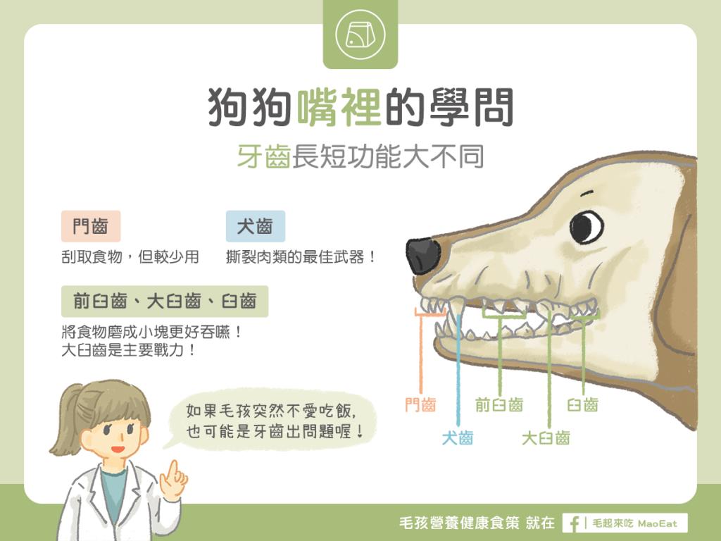 狗狗嘴裡的學問-牙齒門齒犬齒臼齒長短功能大不同!