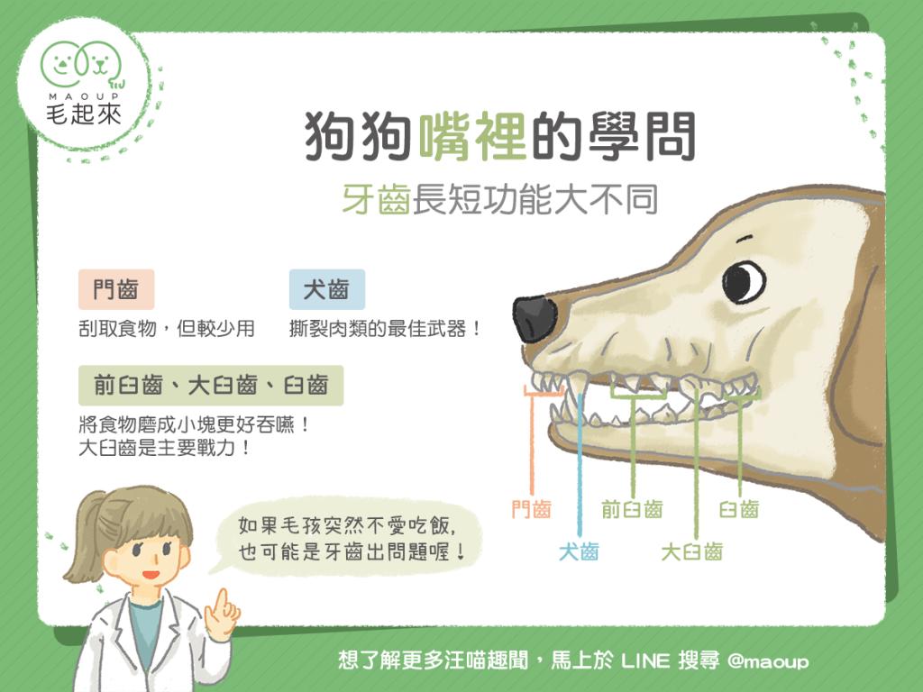 【汪汪小學堂】狗狗嘴裡的學問-牙齒長短功能大不同!