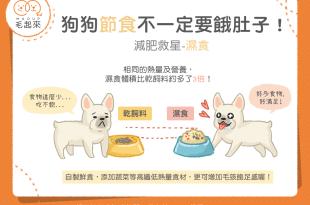 【肥胖汪喵飲食】狗狗節食不一定要餓肚子!減肥救星-濕食