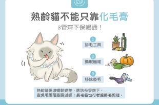 熟齡貓不能只靠化毛膏排毛3管齊下保暢通