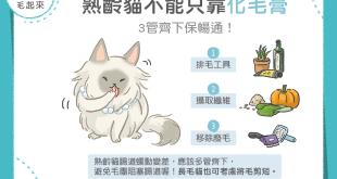 【喵喵康健】熟齡貓不能只靠化毛膏!3管齊下保暢通!