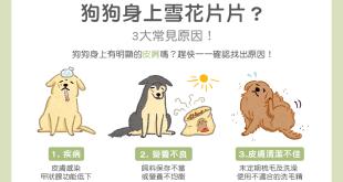 狗狗身上雪花片片3大常見皮屑原因
