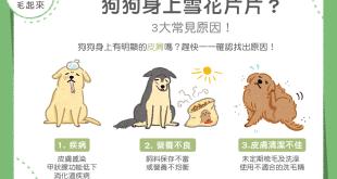 狗狗皮屑3大常見原因