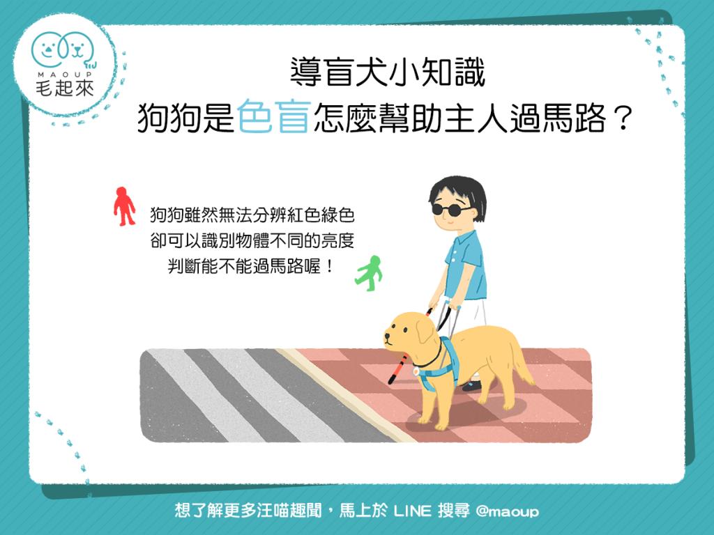 【導盲犬小知識】咦?狗狗是色盲,那怎麼幫助主人過馬路呢?