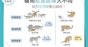 【汪汪小學堂】貓狗飲食習慣大不同,從野生同類看出端倪!