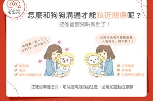 【汪汪小學堂】怎麼和狗狗說話才能拉近關係呢?把他當嬰兒哄就對了!