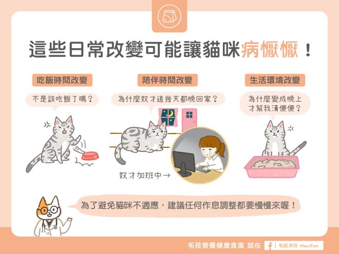 這些日常作息改變可能讓貓咪產生壓力病懨懨
