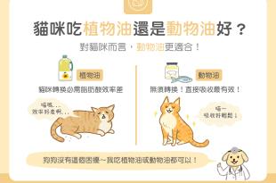 貓咪吃植物油還是動物油好對貓咪而言動物油更適合