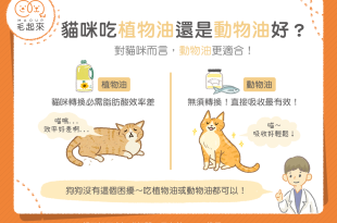 【汪喵餵養知識】為什麼動物油比植物油更適合貓咪呢?