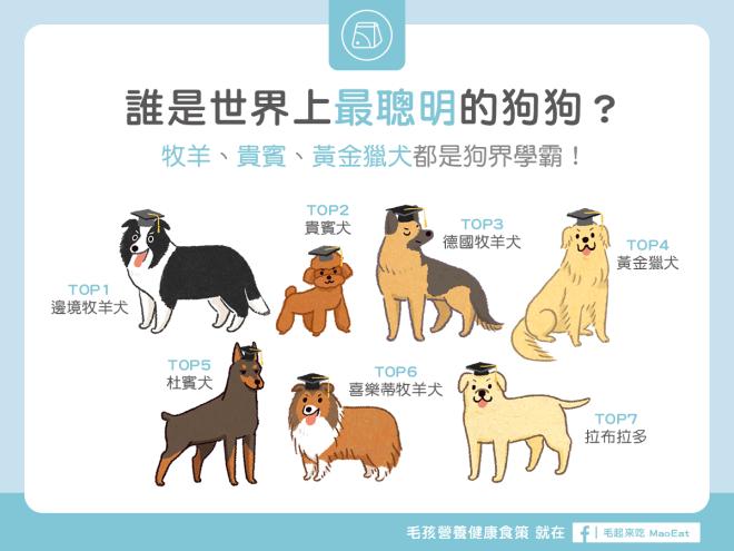 誰是世界上最聰明的狗狗牧羊貴賓黃金獵犬都是狗界學霸