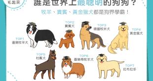 【汪汪小百科】誰是世界上最聰明的狗狗?狗界的學霸原來是...