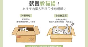 就愛躲貓貓!為什麼貓星人對箱子情有獨鍾?壓力安全感寵物紙箱貓咪躲藏適應