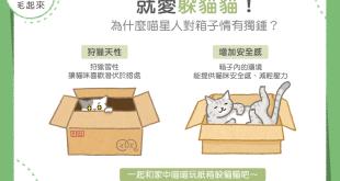 【貓咪行為學】就愛躲貓貓!為什麼貓星人對箱子情有獨鍾?
