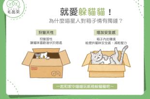 貓咪喜歡躲紙箱的原因