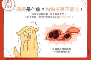 【毛孩食材圖鑑】蘋婆是什麼?狗狗千萬不能吃!