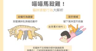 貓咪行為學喵星人在幫主子馬殺雞?萌萌的踩踏行為是有原因的!信任喝奶安心寵物按摩母奶氣味滿足貓咪踩踏開心