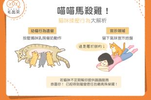 【貓咪行為學】喵星人幫主子馬殺雞?萌萌的踩踏是有原因的!