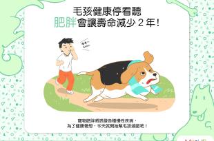 毛孩健康停看聽——肥胖會讓狗狗貓貓折壽2年!?