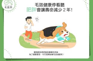 【汪喵康健】毛孩健康停看聽——肥胖會讓狗狗貓貓折壽2年!?