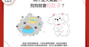 【汪汪康健】天氣變熱,狗狗容易拉肚子?