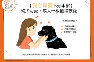 【汪汪真心話】愛心領養不分年齡—幼犬可愛,成犬一樣值得被愛!