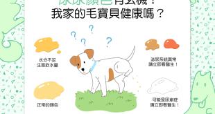 【汪汪康健】尿尿顏色有玄機?我家的毛寶貝健康嗎?