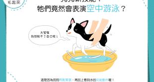 【汪汪行為學】狗狗新技能!牠們竟然會表演空中游泳?