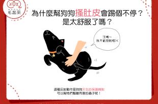 【汪汪行為學】為什麼幫狗狗搔肚皮會踢個不停?是太舒服了嗎?