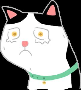 貓感冒流淚