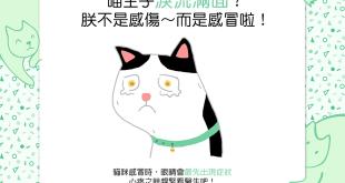 貓貓怎麼淚流滿面?貓不是感傷~而是感冒啦!