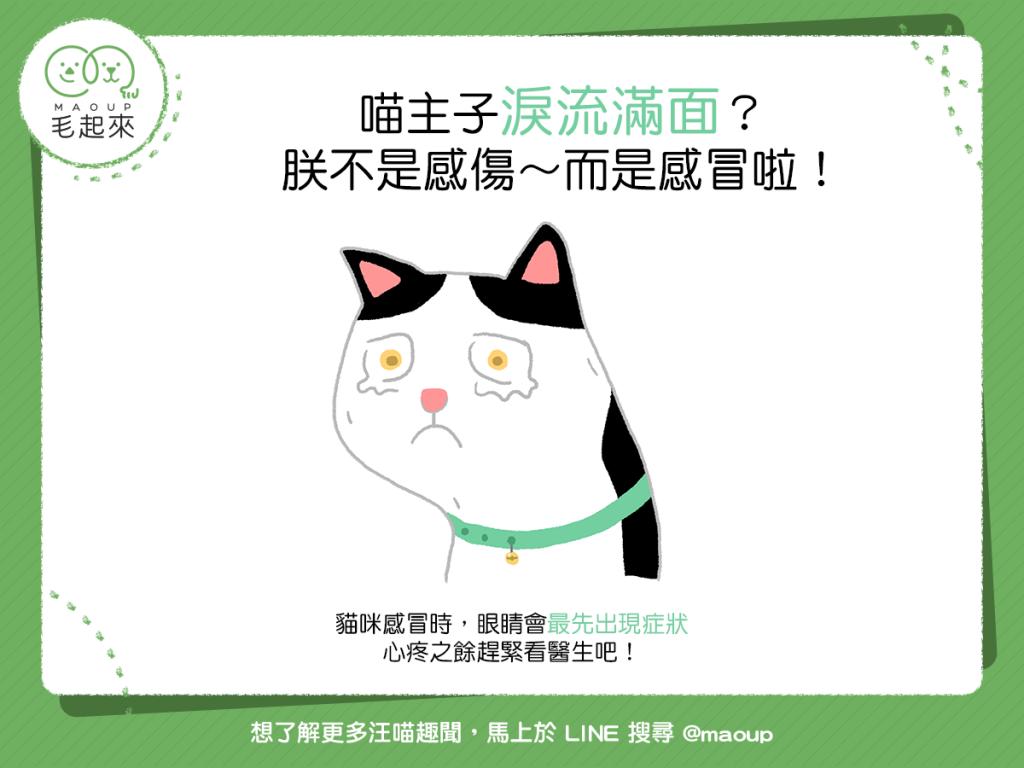 貓流眼淚可能是因為感冒